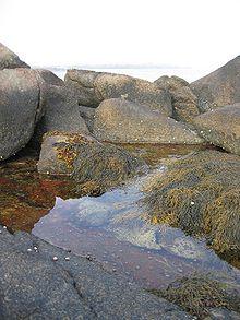 Harbor Tidal Pool (Matinicus Island, ME).jpg