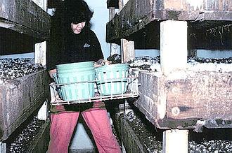 Personne portant des récipients entre des étagères à champignons