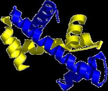 Structure tridimensionnelle de deux domaines histone-fold associés selon le motif de la poignée de main