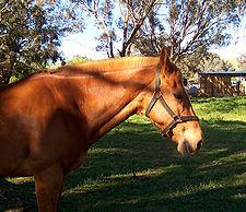 Horse in field.jpg