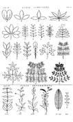 Folia Composita et Folia Determinata
