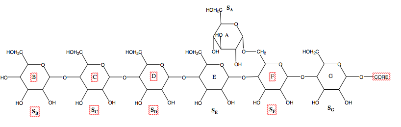 Hypothesized substraight binding location.png
