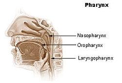 Illu pharynx.jpg