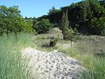 Indiana Dunes-State-Park-02.jpg