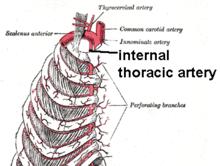 Internal mammary branch.png
