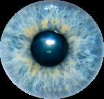 Élément de l'œil