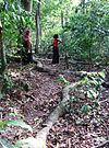 Kaya-skog.jpg