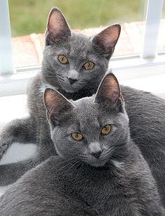 Korat Sisters.jpg