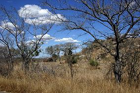 Landscape kruger-park.jpg