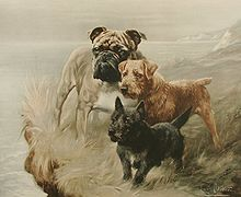 """""""A painting of three dogs of different sizes, the smallest black, the mid sized one is brown and the largest, a bulldog is cream. They stand on a clifftop looking into the distance."""""""