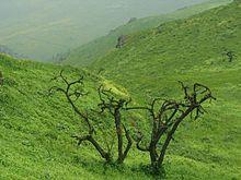 Lomas de Lachay.jpg