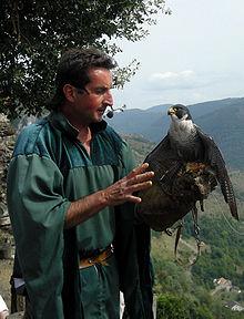 Fauconnier et son faucon pèlerin au château de Lordat (Ariège)