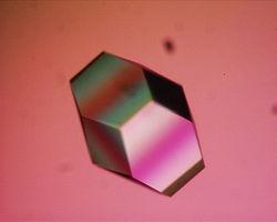Lysozyme crystal1.JPG
