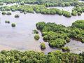 Manglares Laguna de Términos.jpg