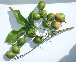 Fruits de Melicoccus bijugatus