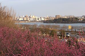 Mito skyline over plums.jpg