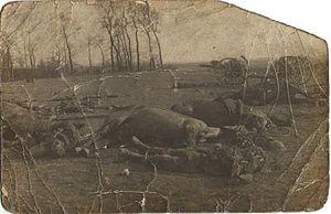 Morts britanniques à la bataille de Le Cateau.jpg