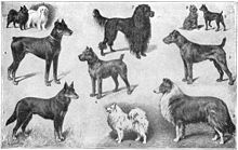 Gravure ancienne montrant 11 races de chien