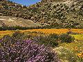 Namaqualand, Goegap 1035.jpg