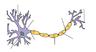 Neuron-no labels.png