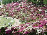 Nishiyama Park.JPG