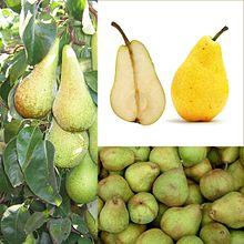 Owoce Gruszka.jpg