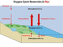 Diagram of the oxygen cycle