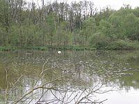 Image illustrative de l'article Réserve naturelle de la petite Camargue alsacienne