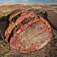 End-on view of a large reddish log in an eroded landscape