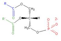 Acide phosphatidique