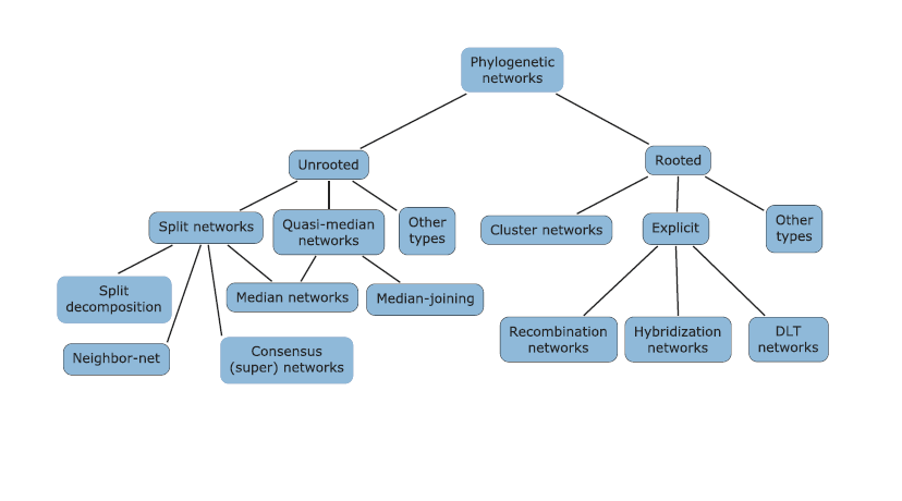 Phylogenetic Network Types.png