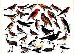 Olika fåglar.