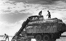 Men loading hay bales onto truck at a Kibbutz.