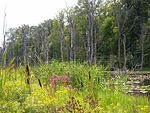 Pokagon State Park Wetlands.JPG
