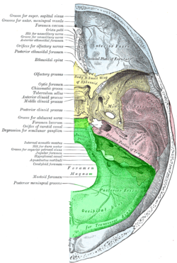 Posterior fossa.png