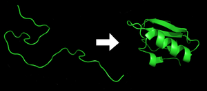 Process of protein folding.