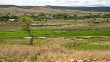 A landscape showing a lush, green rice paddy surrounded by barren, dry hills
