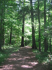Photo of a sunlit-dappled path through a woods full of large trees and green leaves.