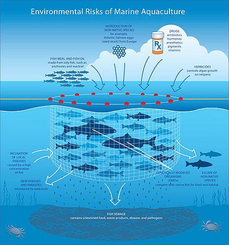 Risks aquaculture 550.jpg