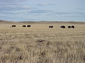 Saskatchewan - Grasslands National Park 02.JPG