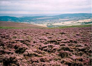 Image illustrative de l'article Parc national d'Exmoor