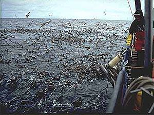 Photo of thousands of birds feeding at water surface next to fishing boat