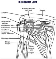 Diagramme d'une articulation de l'épaule humaine.