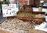 Snails-Italy.jpg