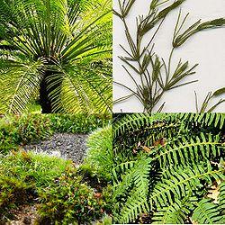 alt= De gauche à droite et de haut en bas: * Cycas circinalis  * Chara globularis * Briophyte (mousse) indéterminée * Polypodium virginianum