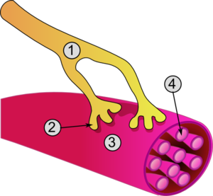 Synapse diag3.png