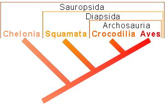 Phylogenetisches System der Sauropsida (Version 1)
