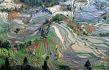 A picture of rice fields: evidence of the interaction of culture, economics and the environment