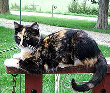 A cat with patches of orange and black fur.