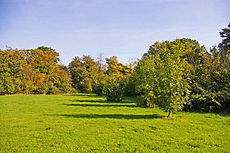 Looking east in Trent Park from near the entrance opposite Oakwood Station.